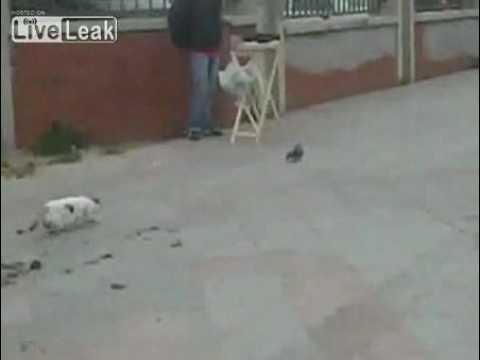 【絶対に逃がさん!】獲物を取り逃がして凹む猫w