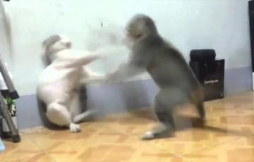 【猫】この編集は卑怯w猫が本気で喧嘩をした動画が面白い!